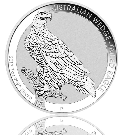 Australien Wedge Tailed Eagle 2017